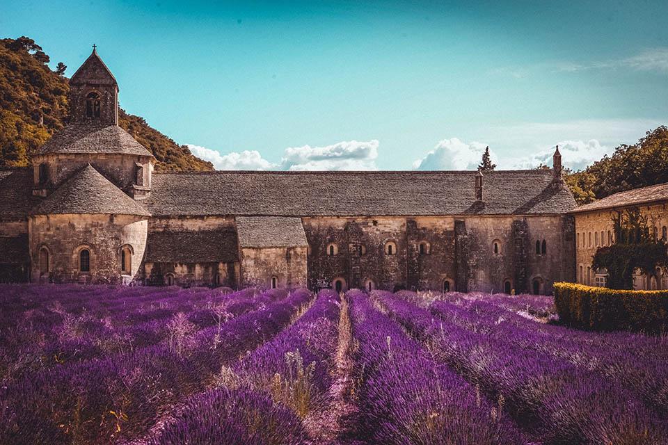 S-camp Provence Abbaye Notre Dame de Senanque Lavande